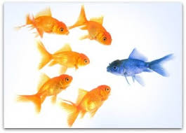 Competitive differentiation is an integral part of your messaging.