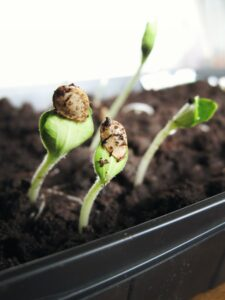 organic growth customer centric marketing metrics best practices